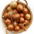 Onion — Stock Photo #1760153