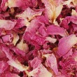 Stock Photo: Rose petal background