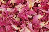 Rose petal background — Stock Photo
