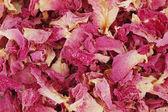 Rose petal background — Stock Photo