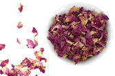 Rose petal — Stock Photo