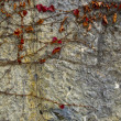 Royalty-Free Stock Photo: Old castle wall with plant