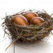 Golden eggs in nest — Stockfoto
