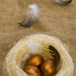 Golden eggs in nest — Stock Photo #1219601
