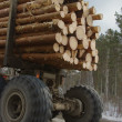 Wood transportation - Stock Photo