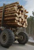 Wood transportation — Stock Photo