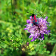 Insect on a flower — Stock Photo #1319570