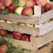 Wooden boxes full of ripe apples — Stock Photo