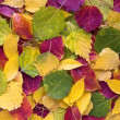Autumn leaves as texture — Stock Photo #1398248