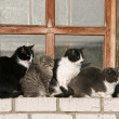 Four cats on window sill — Stock Photo #1398349