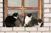 Four cats on a window sill — Stock Photo