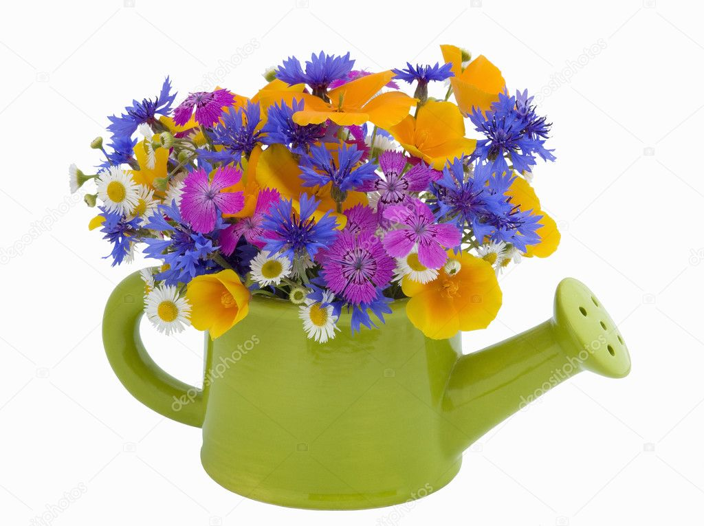 Bunch of flowers in the  watering pot isolated on white background — Stock Photo #2046364