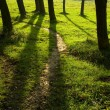Spring forest path — Stock Photo