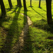 Spring forest path - Stock Photo