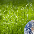 Green grass with earth — Stock Photo