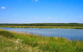 Forest lake at summer — Stock Photo