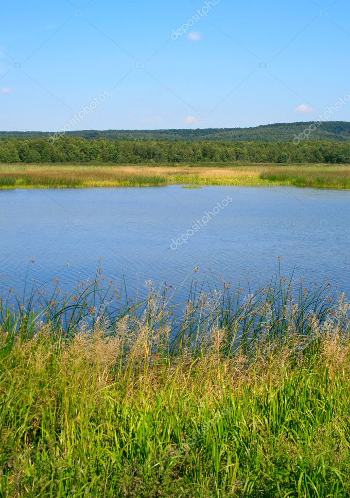 Forest lake at summer with clear blue sky — Stock Photo #2634551