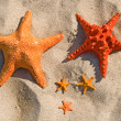 Stock Photo: Family of large and small starfish.