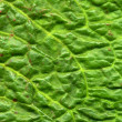 Close up of a green dock leaf. — Stock Photo