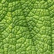 Green leaf macro close up background. — Stock Photo #1931904