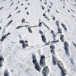 Stock Photo: Lots of footprints in snow.