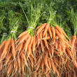 Royalty-Free Stock Photo: Carrots with green stalks and roots.
