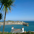 St. Ives harbour palm trees. — Stock Photo