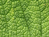 Green leaf macro close up background. — Stock Photo
