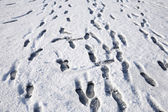 Lots of footprints in the snow. — Stock Photo