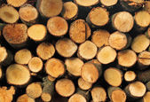 Cut firewood logs stack. — Stock Photo