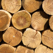 Close up of a stack of cut logs. — Stock Photo