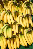 Lots of bunches of bananas. — Stock Photo