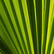 Green leaf natural abstract background. — Stock Photo