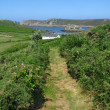Stock Photo: Footpath in Bryher, Isles of Scilly.