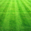 Bowling green grass background. — Stock Photo