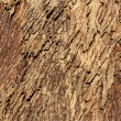 Rough tree bark texture background. — Stock Photo