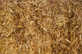 Close up of a straw bale. — Stock Photo