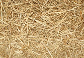 Close up of pieces of straw. — Stock Photo