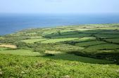 Green fields in Cornwall UK. — Stock Photo