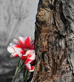Bunch of tulips next to the old tree. — Stock Photo