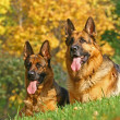 2 shepherds — Stock Photo