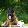 Shepherd and soccer ball — Stock Photo #1450173