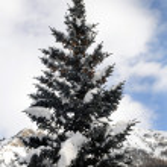Winter — Stock Photo #1493640