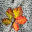 Autumn Leaves On The Wooden Background — Stock Photo #1216992