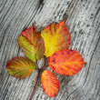 Autumn Leaves On The Wooden Background - Stock Photo