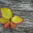 Autumn Leaves On The Wooden Background — Stock Photo