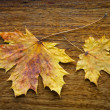 Maple leaves on the wooden background — Stock Photo