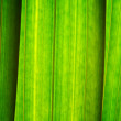 Long green leaves,close-up - Stock Photo