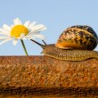 Snail on the rail and flower - Stok fotoraf