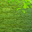 Green leafs and stone wall — Stock Photo